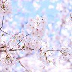 春のコーディネートに欠かせない、エレガントな桜色ジュエリー10選